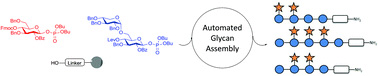 Automated glycan assembly of xyloglucan oligosaccharides