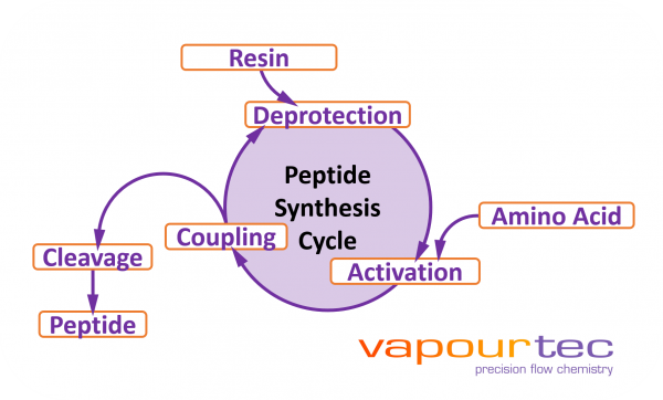 Vapourtec Peptide synthesis Cycle