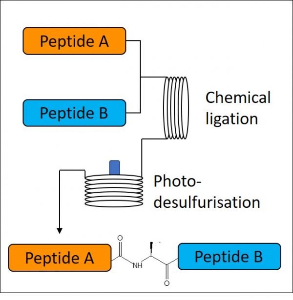 Native-Chemical-Ligation