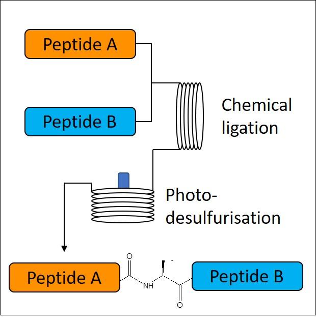 Native-Chemical-Ligation